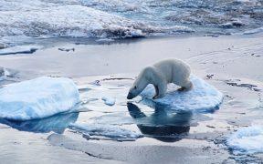 ghiaccio artico